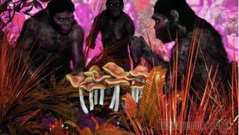 Креационизм, теория мутаций и обезьян: малоизвестные, но заслуживающие внимания теории эволюции