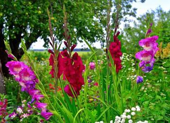 Необычные и экзотичные гладиолусы – эти сорта вас точно не разочаруют