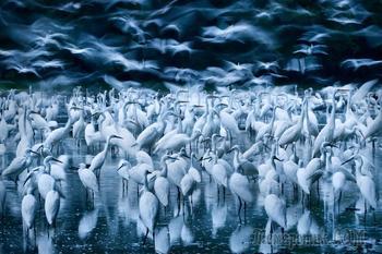 Народный фотограф дикой природы