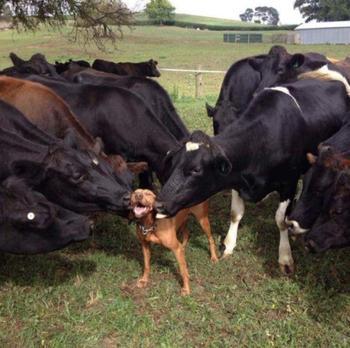 15 животных, которые ведут себя в своей семье совсем как мы