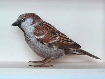Сверхреалистичные бумажные 3D-модели птиц Йохана Шерфта