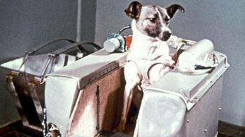 Забытые герои, или как животные исследовали космос