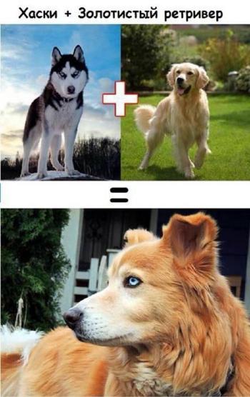 Эти забавные щенки — результат любви собачек разных пород