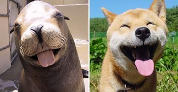 Морские котики вовсе не котики, а собачки