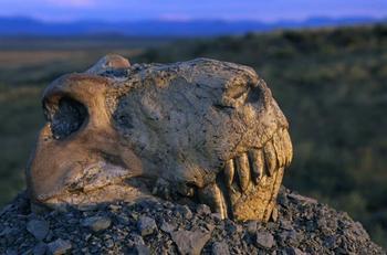О причинах пермского вымирания животных