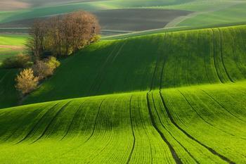 """История знаменитой песни Greenfields /зеленые поля,у нас - """"город детства"""""""