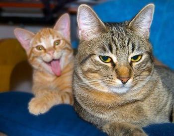 Коты - фотобомберы