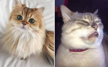 Несколько особенностей жизни с котиком: ожидание и реальность