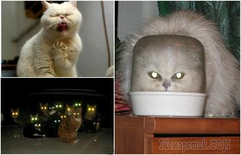 Впечатляющие снимки о том, что коты - пришельцы с другой планеты