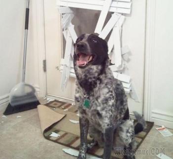 27 фотографий о том, как хулиганят собаки