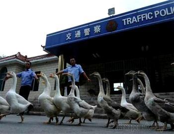16 секретов о Китае, о которых обязательно стоит разузнать перед приездом