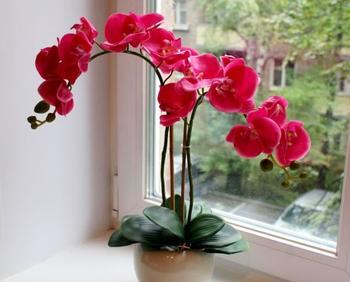 Что делать, если у орхидеи вянут листья
