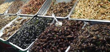 10 блюд из насекомых, которые считаются деликатесом в разных странах