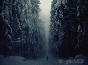 Тёмный лес или столкновение с бездной.