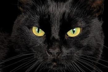 Что значит увидеть чёрную кошку во сне?