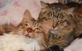Неудачные фотографии кошек
