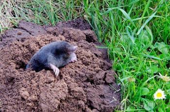 Копать или не копать: вся правда о частой перекопке почвы