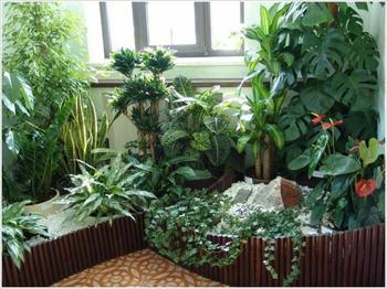 Уголок живой природы в детском саду: как правильно подобрать комнатные растения?
