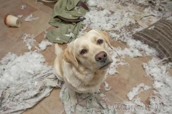 20 доказательств того, что не стоит оставлять домашних животных на хозяйстве