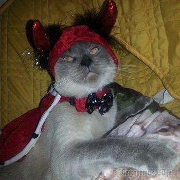 Коты, являющиеся истинным воплощением зла