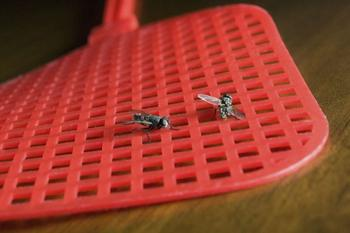 Как быстро избавиться от назойливых мух
