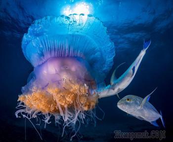 Дивный подводный мир в снимках призеров фотоконкурса Ocean Art 2018