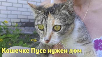 Ищем дом для красивой кошки Лапуси!