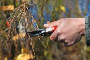 Посадка винограда осенью: как и когда лучше сажать в грунт саженцы