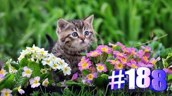 Смешные коты | Приколы с котами | Видео про котов | Котомания # 188 (видео)