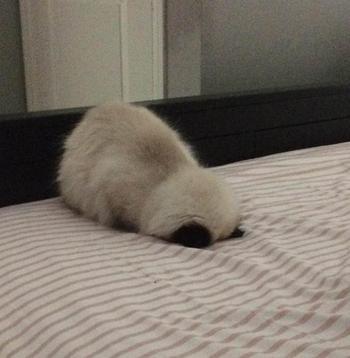 18 мохнатых лежебок, обожающих засыпать там, где человек ни за что не догадается