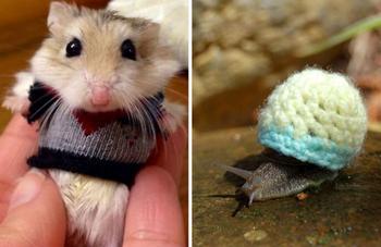 Эти 20 фотографий безумно милых животных в свитерах согреют вас
