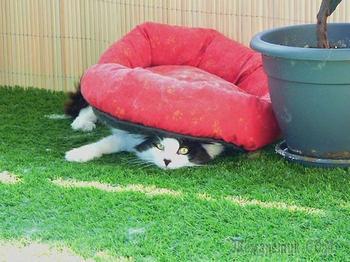 Кошачья логика, непонятная простому человеку