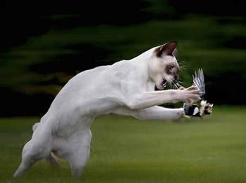 Владельцы кошек из Новой Зеландии обескуражены, поскольку их питомцы станут вне закона