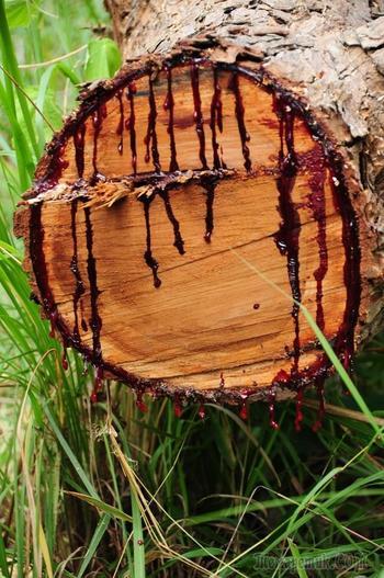 Жуткое и удивительное тиковое дерево