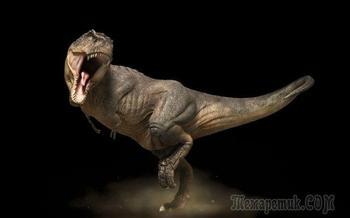 10 распространенных заблуждений о динозаврах