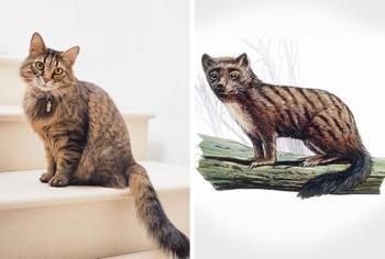 15 фотосравнений животных с их доисторическими предками