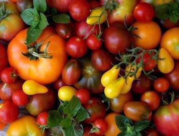 Как выбрать семена томатов и не прогадать