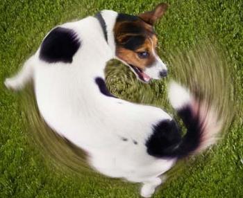 О чем виляет хвост собачий?