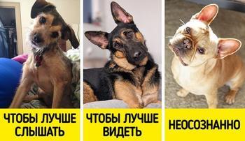 10 собачьих привычек, которые мы понимаем неправильно