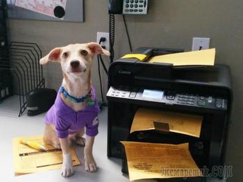 20 фотографий, доказывающих, что собаки - отличные сотрудники