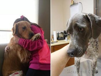 22 кошки и собаки, которые ну очень не хотят идти к ветеринару