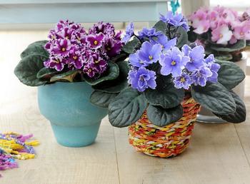 Два простых способа выращивания фиалки из листочков в домашних условиях