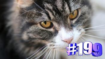 Видео подборка с котиками #199