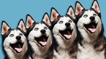 Дорого и возмутительно: кому и зачем нужны клоны собак
