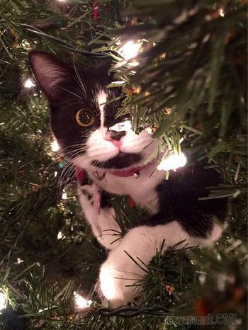 Кошки, которые решили помочь своим владельцам украсить новогоднюю ёлку