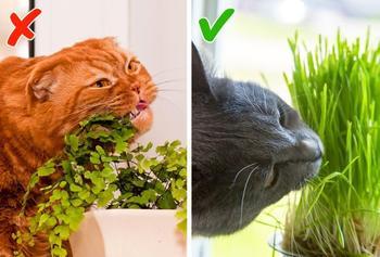 7 кошачьих привычек, которые хозяева часто позволяют и невольно вредят здоровью питомцев