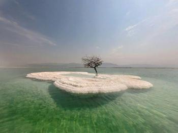 """""""Древо жизни"""", растущее на соляном острове посреди Мёртвого моря"""