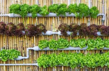 Интересные идеи создания вертикального сада