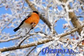 Стыло, снежно...(Стих)