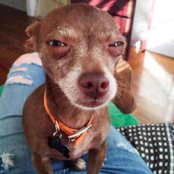 Собаки, которые убьют вас, если вы не дадите им вкусняшку прямо сейчас